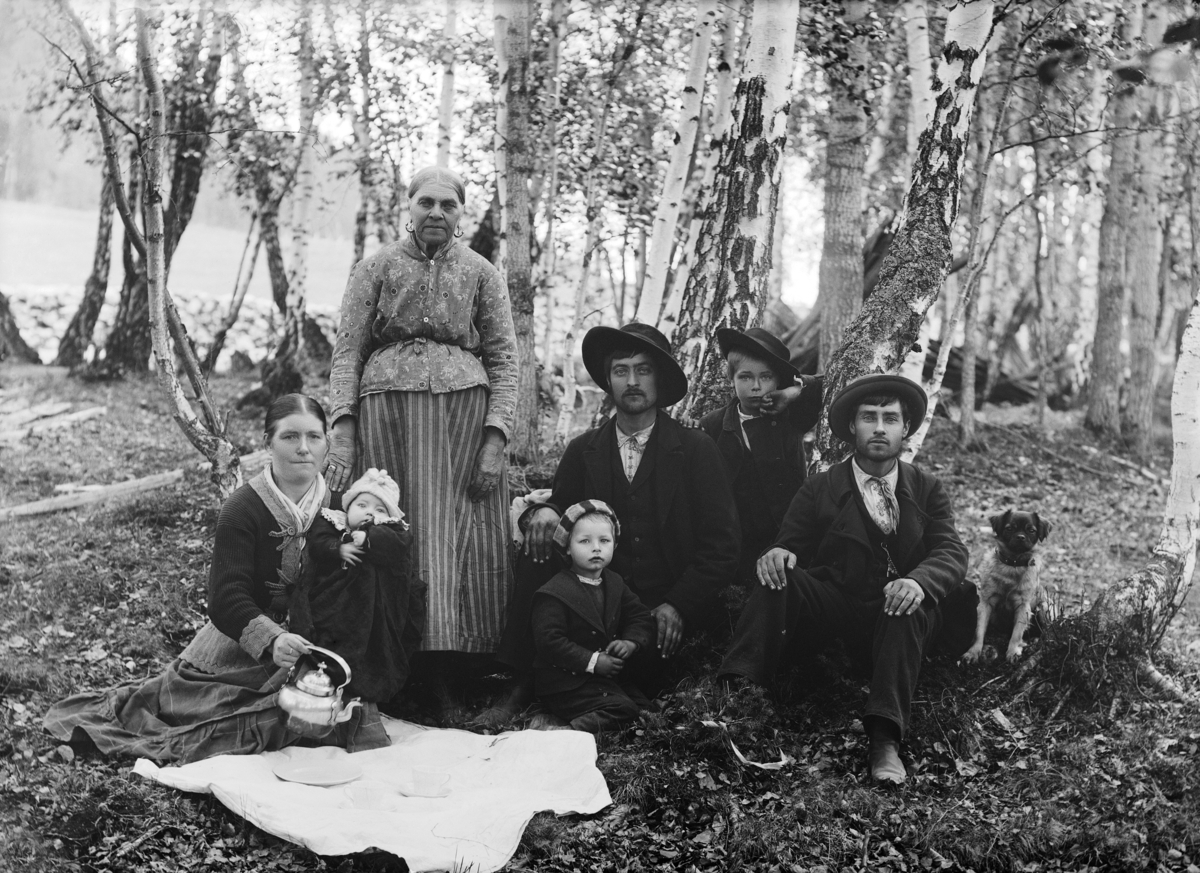 Several generations gathered to picnic under birch trees.