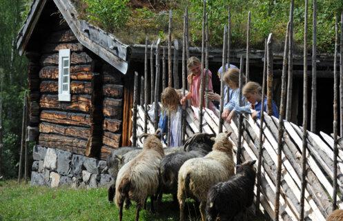 Children and sheep at Maihaugen open-air museum.
