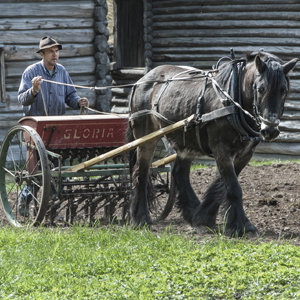 The farmer and the horse at work at Maihaugen, Lillehammer.