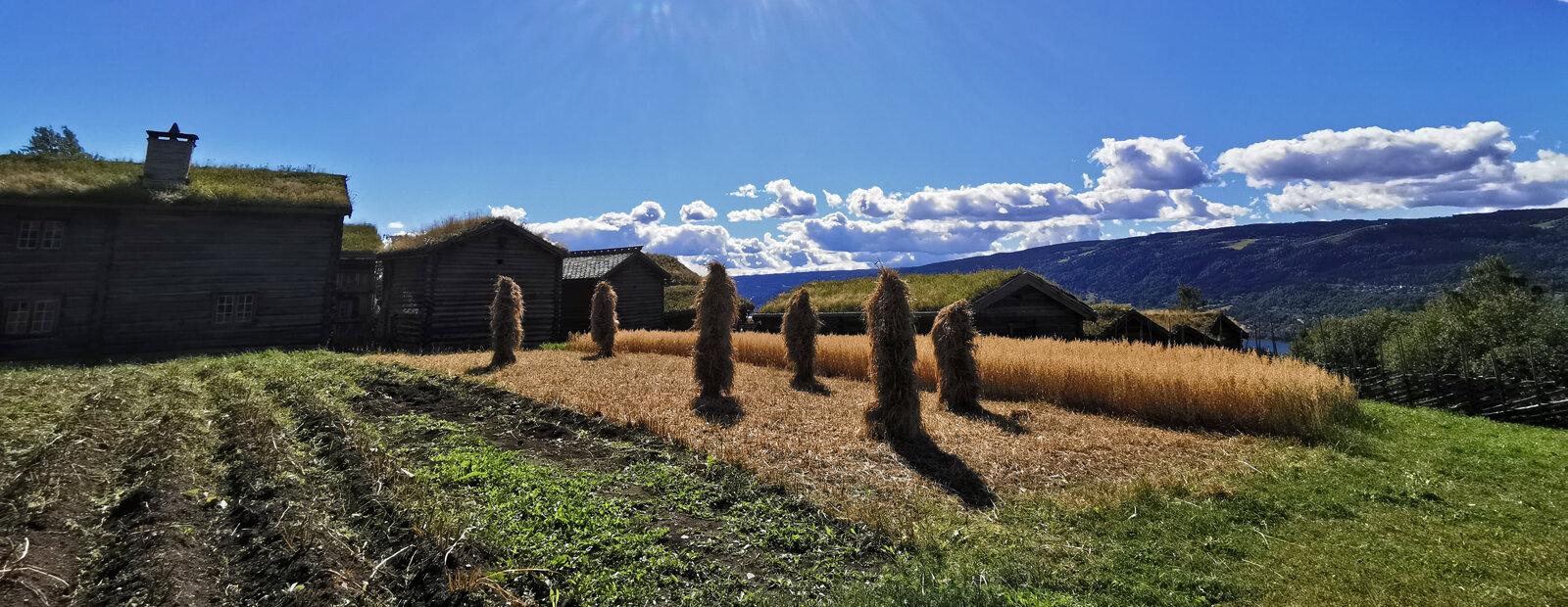 Sheaf of grain on poles.