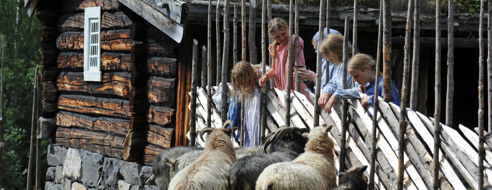 Children and sheep at Maihaugen open-air museum.